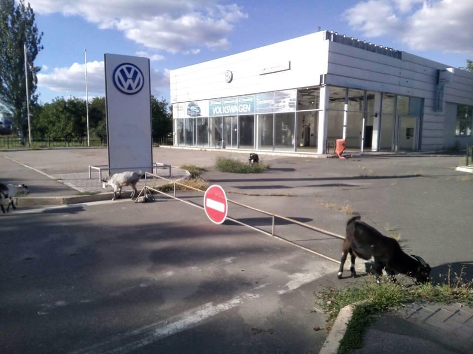 Луганск сегодня - автосалон Volkswagen и козы