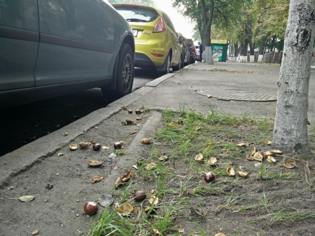 Падающие каштаны - новая угроза для киевских автовладельцев