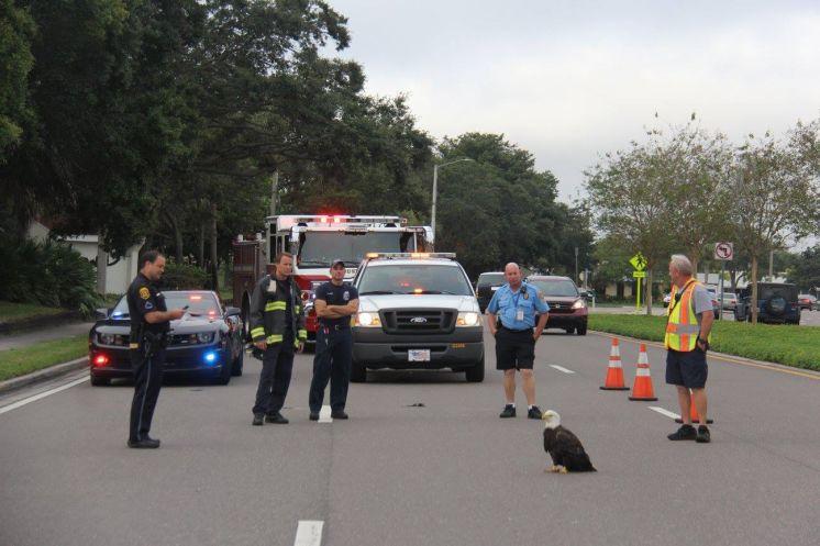 Птичку жалко. Полиция перекрыла дорогу из-за орла с перебитым крылом