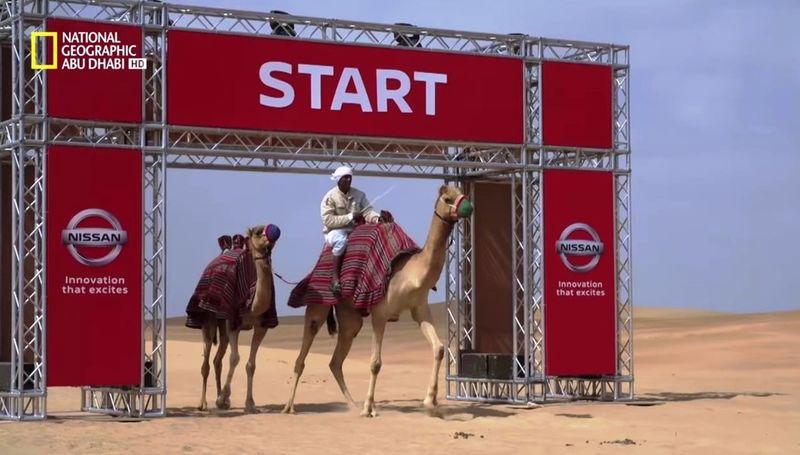 Ниссан предложил ввести варабских государствах представление «верблюжья сила