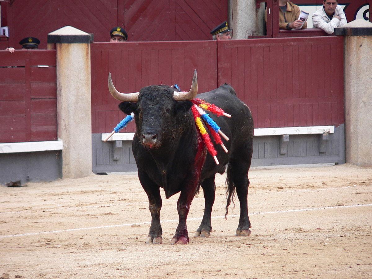 Самые длинные названия авто бык Мурсьелаго