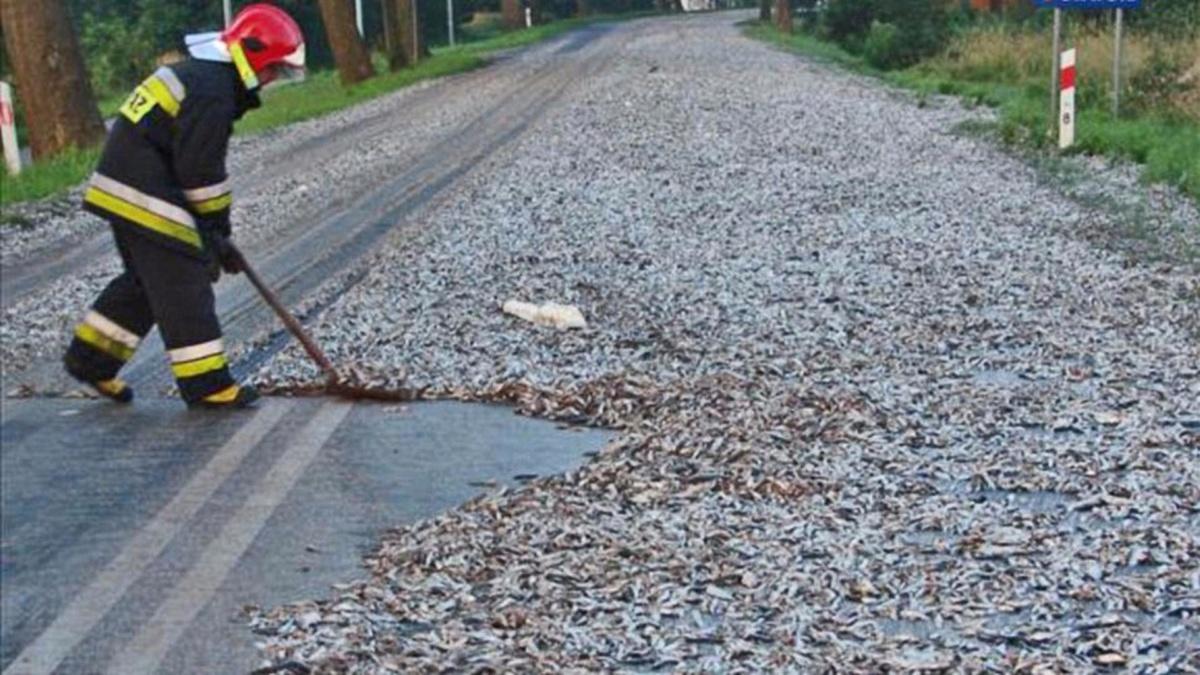 10 самых необычных грузов потерянных при ДТП - тонны свежей рыбы