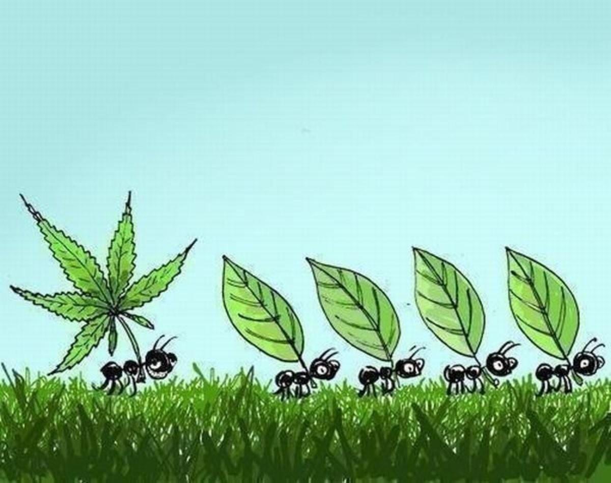 Хочешь успеть, снижай скорость - движение муравьев