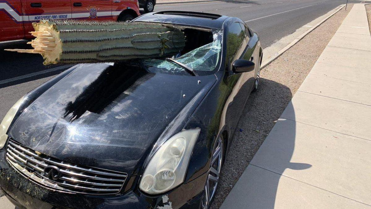 кактус атаковал автомобиль